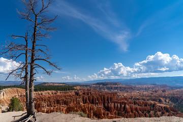 Single tree overlooks the Bryce Canyon National Park hoodoos amphitheater