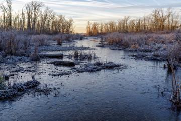 Frozen Marsh Stream