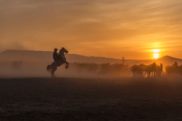 wild horses sunset and cowboy, ridding