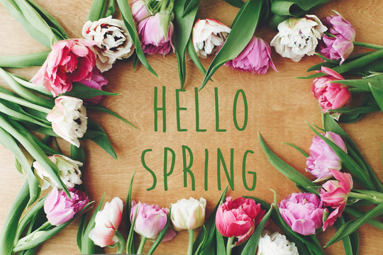 Hello spring text sign on beautiful double peony tulips frame flat lay on wooden table. Springtime. Stylish floral greeting card. Hello march