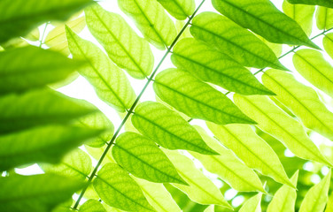 Green leaf and tree branch with sunlight shade