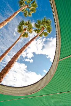 Palm Trees Through Architecture