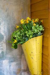 Gelber Blumenkübel an einer Wand mit schönen Frühlingsblumen