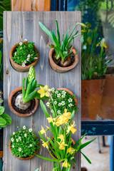 Mehrere Frühlings Gewächse in einem Tontopf auf einem Tisch