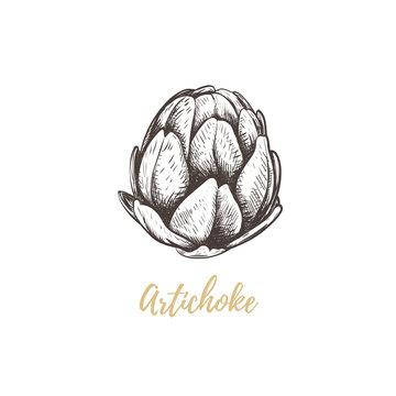 artichoke sketch hand drawing