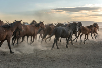 the old horses run out of dust in smoke