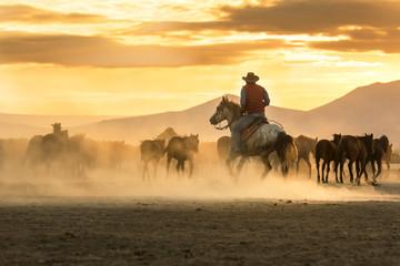 the cowboy who runs a herd of wild horses