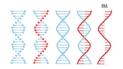 Vector DNA RNA molecule helix spiral genetic code
