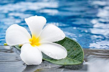 Tropical plumeria flowers frangipani near a water pool