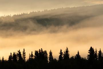 Sunrise on a foggy morning;  Fairbanks, Alaska