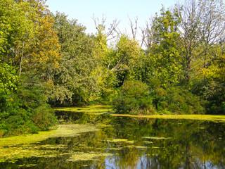 Fototapeta Swamp forest lake