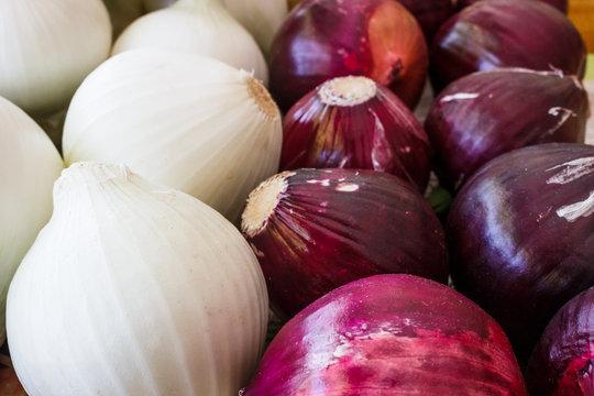 Cebolla morada y blanca - onions