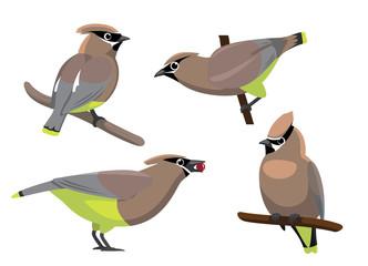 Bird Cedar Waxwing Set Cartoon Vector Illustration