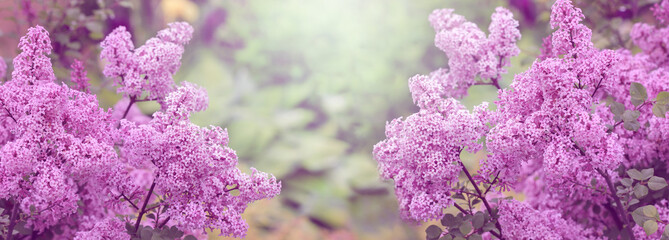 Photo sur Aluminium Lilac Blooming Lilac, spring background, banner