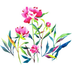 Watercolor botanical illustration.Hand drawn pink peonies. blossom flowers, buds and leaves isolated on white