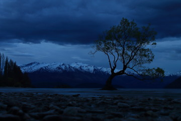 Lonely Tree in Wanaka