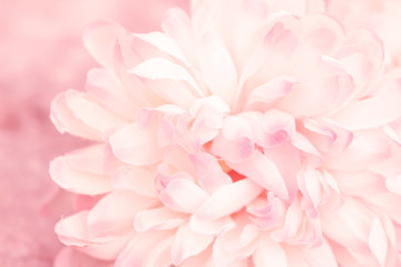Beautiful flowers made with color filters in soft color and blur style for background