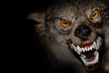 Angry werewolf face in darkness. Photo manipulation