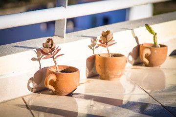 Plant in a clay flowerpot on a flat roof at sunrise. Africa Morocco Agadir