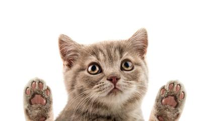 closeup muzzle kitten Wall mural