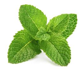 Fototapeta Fresh leaf mint green herbs ingredient for mojito drink, isolated on white background. obraz
