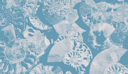 Abstract granular background of fossil Ammonites, Ammonoidea. Decorative wallpaper of petrified shells. Print from textured white spirals of seashells on blue backdrop. Stamps of Cephalopoda mollusks.