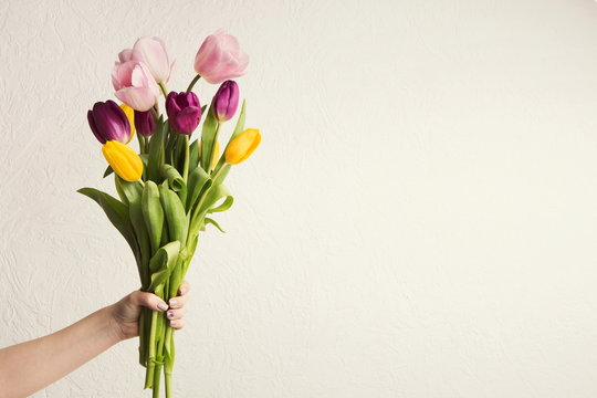 Hand holding tulips bouquet at white background, copy space