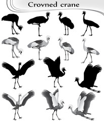 Collection of crowned cranes in black-white image and silhouette