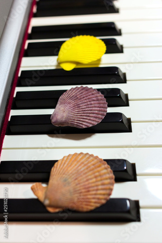 Composition of colorful seashells on the piano keyboard  Concept of