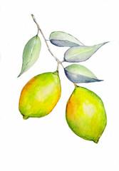 Yellow lemons