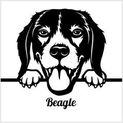 Beagle - Peeking Dogs - - breed face head isolated on white