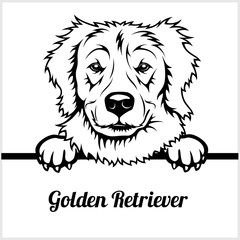 Golden Retriever - Peeking Dogs - - breed face head isolated on white