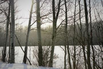 Beautiful Winter Day