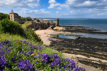 St Andrews Castle ruins on rocky North Sea coast overlooking Castle Sands beach in St Andrews Fife Scotland UK with purple geraniums Wall mural