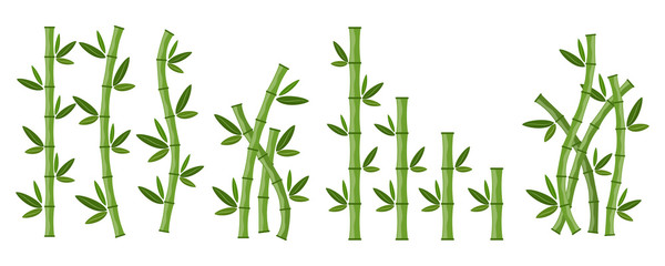 Green bamboo branches and leaves. Vector illustration.
