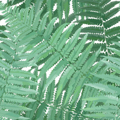 Herbs and Leaves Botanical Seamless Pattern. Fern Leaf Natural Background. Floral Forest Field Plants Design for Wallpaper Print Tropical Decoration. Vector illustration
