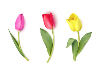 Set of colorful tulips isolated on white. Spring flowers. Vector illustration
