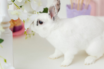 White rabbit sitting on a table near sweets - cupcakes and lollipops with white decorations on background