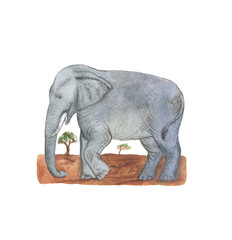 hand drawn watercolor illustration/Elephant