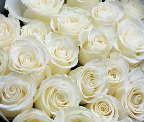 Fototapete - Fresh white roses bouquet flower background