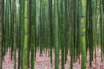 Taehwagang park Simnidaebat bamboo forest Fototapete