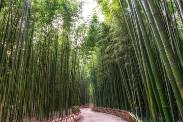 Simnidaebat bamboo forest path Wall mural