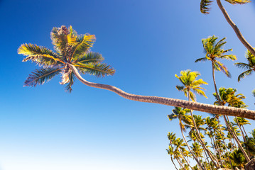 Palm trees against blue sky in Punta Cana Beach, Dominican Republic