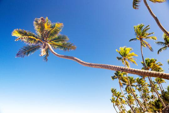 Palm trees against blue sky in Punta Cana Beach, Dominican Republic