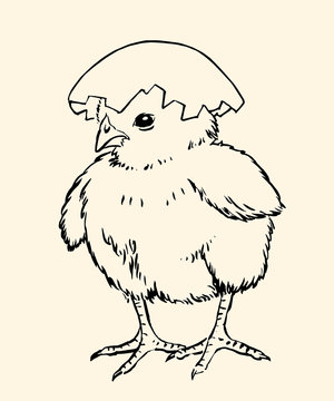 Chick03v
