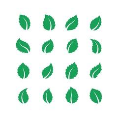 Mint leaves. Peppermint melissa green leaf, fresh eco food label, vegan herbal farm plant, spearmint leaf. Vector flat tea leaves