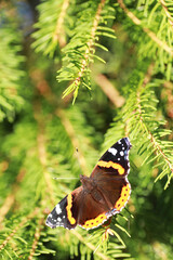 A small butterfly will sit on a tree in spring evening.