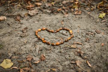 Fototapeta Serce uformowane na ziemi z żołędzi obraz