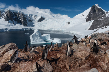 Chinstrap penguins with a chicks antarctica
