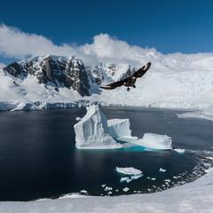 view of antarctica with flying bird